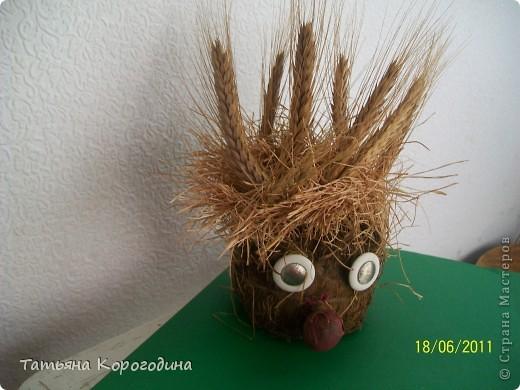 дядюшка Ау (посев семян пшеницы в чулке с опилками) фото 2