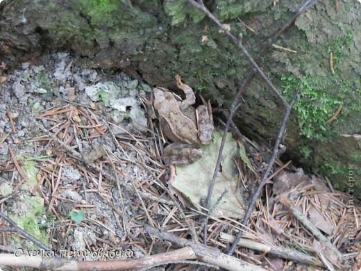 Земляничка (первая, на припёке) фото 8