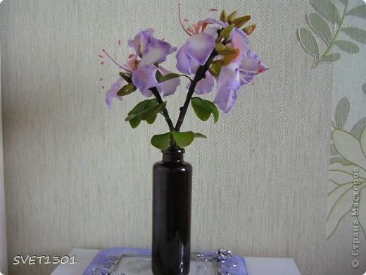 Представляю на ваш суд свою очередную работу по лепке из самодельного холодного фарфора. Это растение называется баухиния или орхидейное дерево. И как обычно это растение мне показала Оля (lolkaolga )  Она большая затейница по части отрыть что то интересное- спасибо ей за это! фото 1