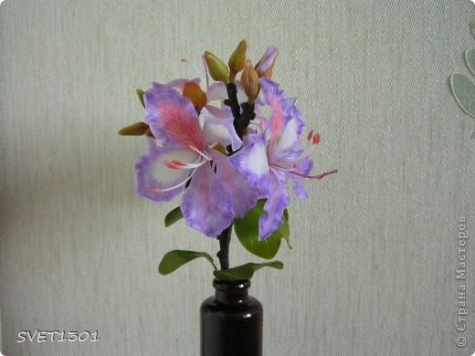 Представляю на ваш суд свою очередную работу по лепке из самодельного холодного фарфора. Это растение называется баухиния или орхидейное дерево. И как обычно это растение мне показала Оля (lolkaolga )  Она большая затейница по части отрыть что то интересное- спасибо ей за это! фото 2