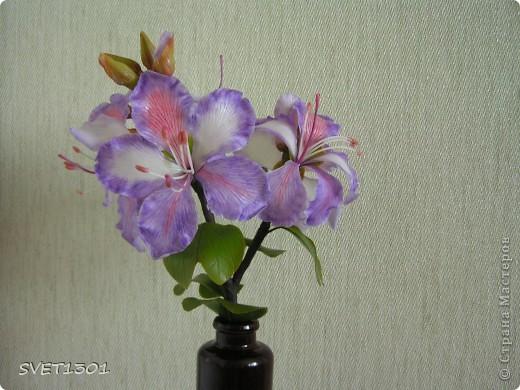 Представляю на ваш суд свою очередную работу по лепке из самодельного холодного фарфора. Это растение называется баухиния или орхидейное дерево. И как обычно это растение мне показала Оля (lolkaolga )  Она большая затейница по части отрыть что то интересное- спасибо ей за это! фото 3