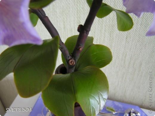 Представляю на ваш суд свою очередную работу по лепке из самодельного холодного фарфора. Это растение называется баухиния или орхидейное дерево. И как обычно это растение мне показала Оля (lolkaolga )  Она большая затейница по части отрыть что то интересное- спасибо ей за это! фото 6