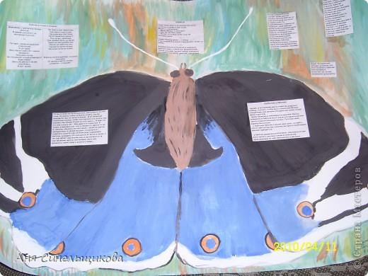 Эту стенгазету мы сделали для конкурса по биологии. На ней написаны интересные факты и анекдоты про бабочек.