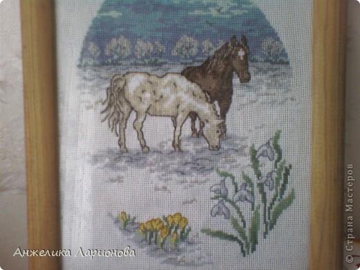 Лошади фото 1