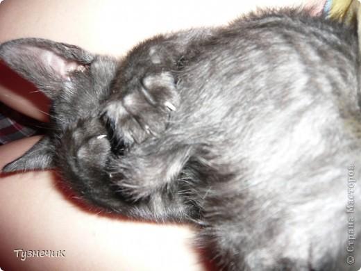 Наш Бублик немного вырос, он очень подвижный, и нормально сфотографировать его можно только, когда он спит...тем более так сладко))) фото 5