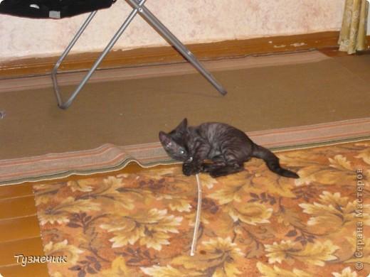 Наш Бублик немного вырос, он очень подвижный, и нормально сфотографировать его можно только, когда он спит...тем более так сладко))) фото 7