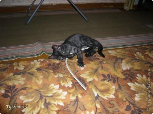 Наш Бублик немного вырос, он очень подвижный, и нормально сфотографировать его можно только, когда он спит...тем более так сладко))) фото 8