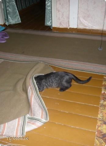 Наш Бублик немного вырос, он очень подвижный, и нормально сфотографировать его можно только, когда он спит...тем более так сладко))) фото 10