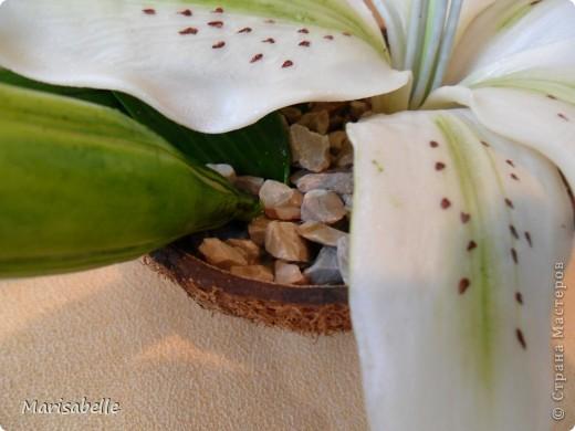 Здравствуйте! Хочу показать Вам свою первую лилию. Это подарок для моей любимой кузины, которая живет в далеких для меня Черновцах. Поэтому мой цветочек впервые уедет так далеко. Лилия оформлена в кокосовую скорлупу, поэтому, думаю, будет хорошим украшением интерьера. фото 4