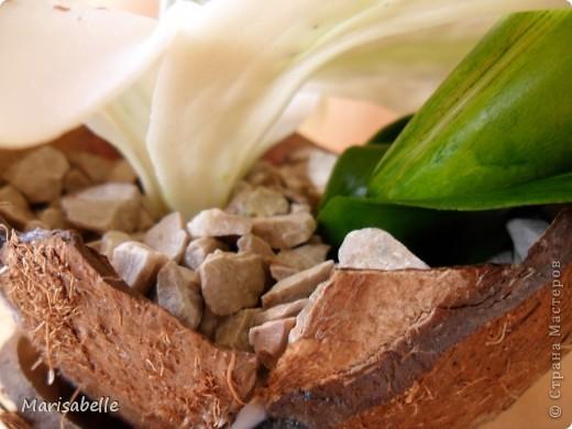 Здравствуйте! Хочу показать Вам свою первую лилию. Это подарок для моей любимой кузины, которая живет в далеких для меня Черновцах. Поэтому мой цветочек впервые уедет так далеко. Лилия оформлена в кокосовую скорлупу, поэтому, думаю, будет хорошим украшением интерьера. фото 5