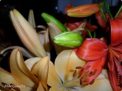 Здравствуйте! Хочу показать Вам свою первую лилию. Это подарок для моей любимой кузины, которая живет в далеких для меня Черновцах. Поэтому мой цветочек впервые уедет так далеко. Лилия оформлена в кокосовую скорлупу, поэтому, думаю, будет хорошим украшением интерьера. фото 30
