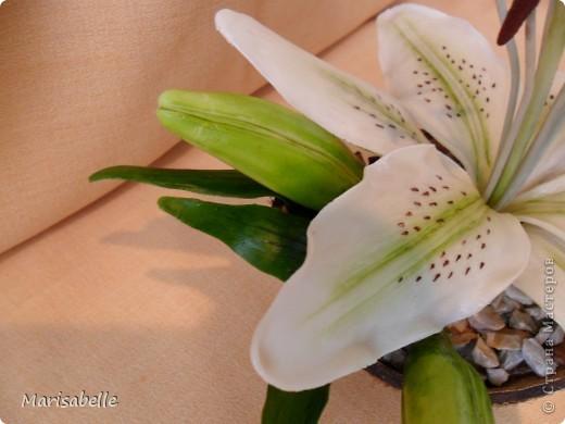 Здравствуйте! Хочу показать Вам свою первую лилию. Это подарок для моей любимой кузины, которая живет в далеких для меня Черновцах. Поэтому мой цветочек впервые уедет так далеко. Лилия оформлена в кокосовую скорлупу, поэтому, думаю, будет хорошим украшением интерьера. фото 3