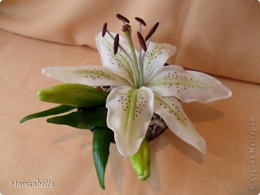 Здравствуйте! Хочу показать Вам свою первую лилию. Это подарок для моей любимой кузины, которая живет в далеких для меня Черновцах. Поэтому мой цветочек впервые уедет так далеко. Лилия оформлена в кокосовую скорлупу, поэтому, думаю, будет хорошим украшением интерьера. фото 1