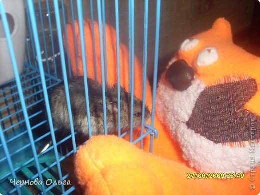 """Однажды в поисках идеи для творчества мы с сыном набрели на кота,там он был зеленый.Спросила сына: """"Сошьём?"""". Он сказал своё твердое ДА!!!!!!!!!!! фото 8"""
