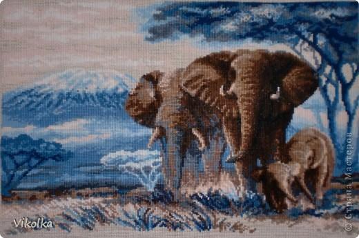 """""""Слоны в саванне"""", набор от фирмы Риолис №1144, нитки -  шерсть, 20 цветов, размер вышивки 40*30 см. Вышивала несколько дней, но в течении трёх месяцев. Начала ещё весной, отшила за несколько дней слонов и забросила, декупаж """"затянул"""" в свои сети :-)). Но сейчас на время отодвинула работы по декупажу и плотно взялась за не доделанные работы по вышивке - ещё пара дней и слоны были готовы. Работу выставляю не оформленной, этим я займусь попозже :)))"""