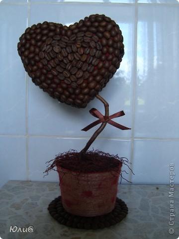 "Кофейное дерево ""Сердечко"" фото 1"