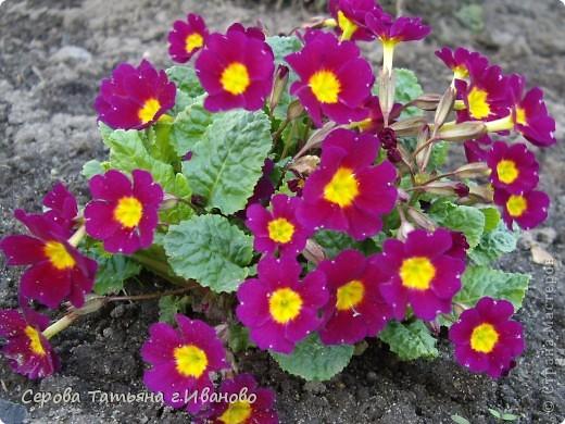 На сайте очень много репортажей с прекрасными цветами, но разве такой красоты бывает много?! фото 3