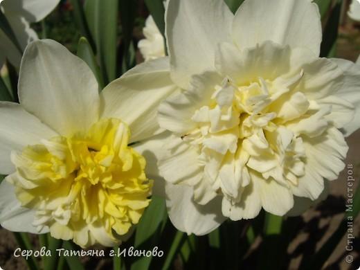 На сайте очень много репортажей с прекрасными цветами, но разве такой красоты бывает много?! фото 4