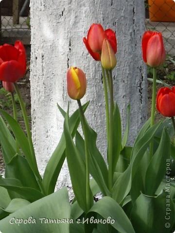 На сайте очень много репортажей с прекрасными цветами, но разве такой красоты бывает много?! фото 9