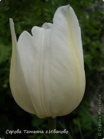 На сайте очень много репортажей с прекрасными цветами, но разве такой красоты бывает много?! фото 10