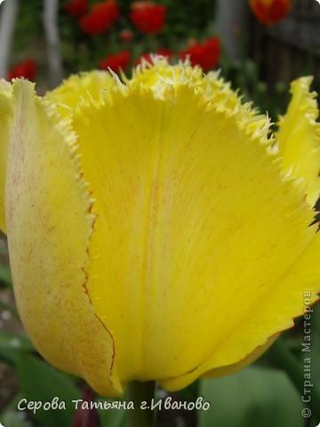 На сайте очень много репортажей с прекрасными цветами, но разве такой красоты бывает много?! фото 14