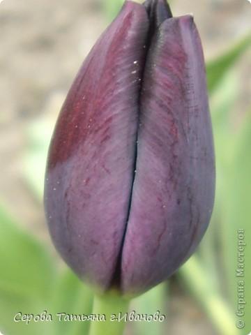 На сайте очень много репортажей с прекрасными цветами, но разве такой красоты бывает много?! фото 18