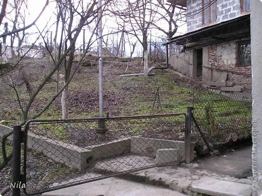 НЕсколько лет назад мы переехали в домик с прекрасным ланшафтом. Там раньше использовалось под огород кусочек территории, остальное все , (склоны), заросло кустами , деревьями и имело вид дикой природы. Тоже, по своему, было красиво, как в парке. Но хотелось цветов и газоны. И маленький огородец, где бы росло все , но с минимуиом усилий. И вот прошло 4 года. Мы с мужем и сыном, почти своими усилиями ,сделали такой мини парк или сад, или  как назвать не знаю, но место где мы все и все наши друзья и родственники любим отдыхать Приглашаю и вас к себе в гости. Этот уголок под окнами. Спереди построили гараж. Видно его крышу. Пока еще не придумали , как украсить ее. Может у кого-то есть идеи... Я постепенно буду грузить фото и описывать растения , может кому интересно, заглядывайте. Буду пополнять. очень тяжело грузится  фото 26