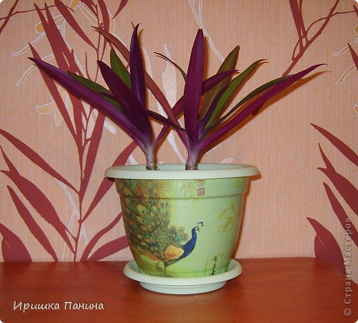 Опять декупажик ;) Давненько я в 12 ночи цветы не пересаживала))))))))))))))  фото 2