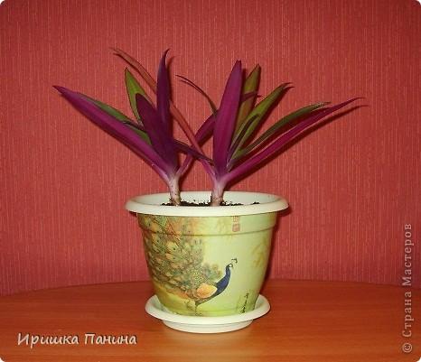 Опять декупажик ;) Давненько я в 12 ночи цветы не пересаживала))))))))))))))  фото 3