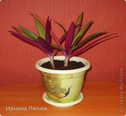 Опять декупажик ;) Давненько я в 12 ночи цветы не пересаживала))))))))))))))  фото 1