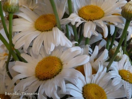 первые ромашки (наконец-то я начала осваивать другие цветы) фото 7