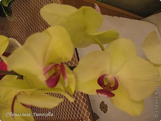 Гроздь нежных бабочек на ветке, Прекрасен сказочный цветок! Я поселила орхидею В прозрачного стекла горшок. Смотрю,любуясь,как на чудо- Не в силах взгляда отвести, Её лелеять,хОлить буду, И станет круглый год цвести! Светлана Тычкова фото 7