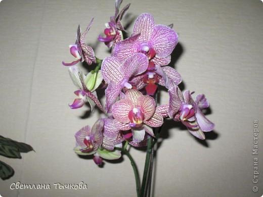 Гроздь нежных бабочек на ветке, Прекрасен сказочный цветок! Я поселила орхидею В прозрачного стекла горшок. Смотрю,любуясь,как на чудо- Не в силах взгляда отвести, Её лелеять,хОлить буду, И станет круглый год цвести! Светлана Тычкова фото 2