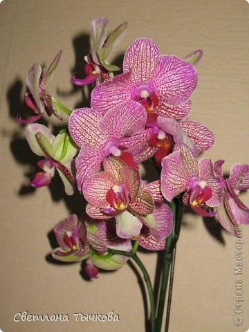 Гроздь нежных бабочек на ветке, Прекрасен сказочный цветок! Я поселила орхидею В прозрачного стекла горшок. Смотрю,любуясь,как на чудо- Не в силах взгляда отвести, Её лелеять,хОлить буду, И станет круглый год цвести! Светлана Тычкова фото 1