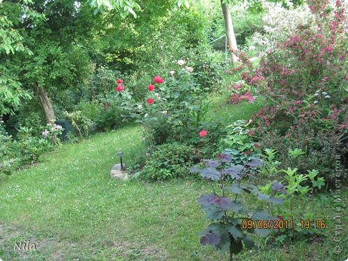НЕсколько лет назад мы переехали в домик с прекрасным ланшафтом. Там раньше использовалось под огород кусочек территории, остальное все , (склоны), заросло кустами , деревьями и имело вид дикой природы. Тоже, по своему, было красиво, как в парке. Но хотелось цветов и газоны. И маленький огородец, где бы росло все , но с минимуиом усилий. И вот прошло 4 года. Мы с мужем и сыном, почти своими усилиями ,сделали такой мини парк или сад, или  как назвать не знаю, но место где мы все и все наши друзья и родственники любим отдыхать Приглашаю и вас к себе в гости. Этот уголок под окнами. Спереди построили гараж. Видно его крышу. Пока еще не придумали , как украсить ее. Может у кого-то есть идеи... Я постепенно буду грузить фото и описывать растения , может кому интересно, заглядывайте. Буду пополнять. очень тяжело грузится  фото 27