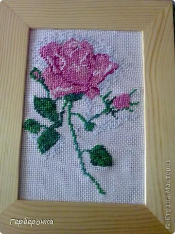 Роза в технике вышивка крестом.Вышивала бабушке на  юбилей,подарком бабуля осталась довольна) фото 1