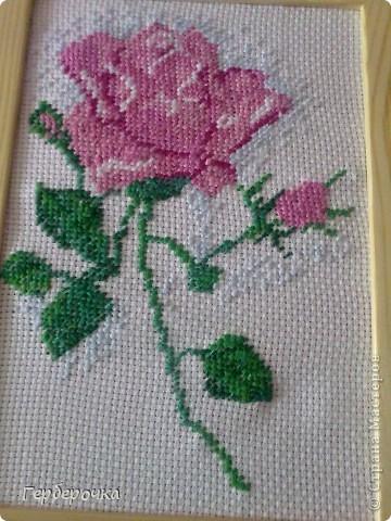 Роза в технике вышивка крестом.Вышивала бабушке на  юбилей,подарком бабуля осталась довольна) фото 2