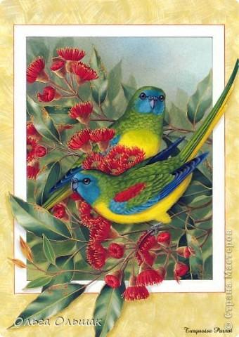 На этот раз у меня появились на свет попугайчики. фото 2