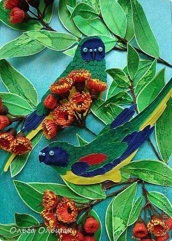 На этот раз у меня появились на свет попугайчики. фото 6