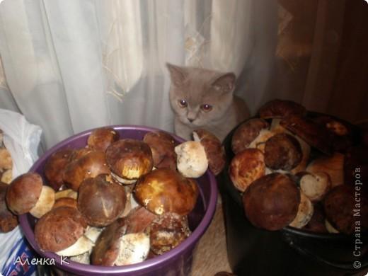 315 грибов-боровичков. фото 3