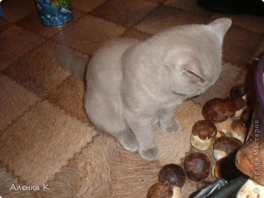 315 грибов-боровичков. фото 4