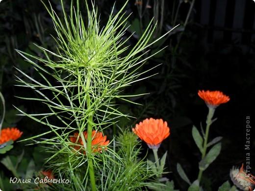Кто не верит, всех зову я в сад,  Видите, моргая еле-еле,  На людей доверчиво глядят  Все цветы, как дети в колыбели.  В душу нам глядят цветы земли,  Добрым взглядом всех кто с нами рядом.  Или же потусторонним взглядом  Всех друзей, что навсегда ушли. ( Расул Гамзатов)  фото 6