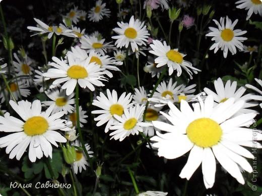 Кто не верит, всех зову я в сад,  Видите, моргая еле-еле,  На людей доверчиво глядят  Все цветы, как дети в колыбели.  В душу нам глядят цветы земли,  Добрым взглядом всех кто с нами рядом.  Или же потусторонним взглядом  Всех друзей, что навсегда ушли. ( Расул Гамзатов)  фото 7