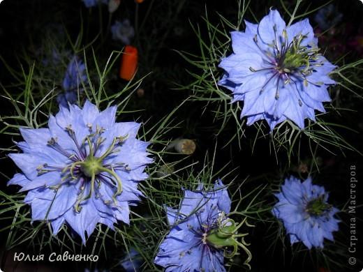Кто не верит, всех зову я в сад,  Видите, моргая еле-еле,  На людей доверчиво глядят  Все цветы, как дети в колыбели.  В душу нам глядят цветы земли,  Добрым взглядом всех кто с нами рядом.  Или же потусторонним взглядом  Всех друзей, что навсегда ушли. ( Расул Гамзатов)  фото 8