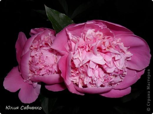 Кто не верит, всех зову я в сад,  Видите, моргая еле-еле,  На людей доверчиво глядят  Все цветы, как дети в колыбели.  В душу нам глядят цветы земли,  Добрым взглядом всех кто с нами рядом.  Или же потусторонним взглядом  Всех друзей, что навсегда ушли. ( Расул Гамзатов)  фото 11
