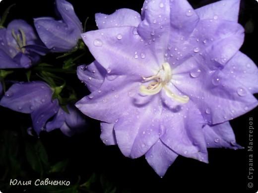 Кто не верит, всех зову я в сад,  Видите, моргая еле-еле,  На людей доверчиво глядят  Все цветы, как дети в колыбели.  В душу нам глядят цветы земли,  Добрым взглядом всех кто с нами рядом.  Или же потусторонним взглядом  Всех друзей, что навсегда ушли. ( Расул Гамзатов)  фото 18