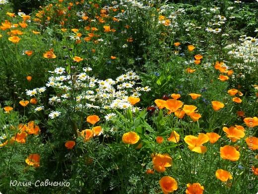 Кто не верит, всех зову я в сад,  Видите, моргая еле-еле,  На людей доверчиво глядят  Все цветы, как дети в колыбели.  В душу нам глядят цветы земли,  Добрым взглядом всех кто с нами рядом.  Или же потусторонним взглядом  Всех друзей, что навсегда ушли. ( Расул Гамзатов)  фото 28