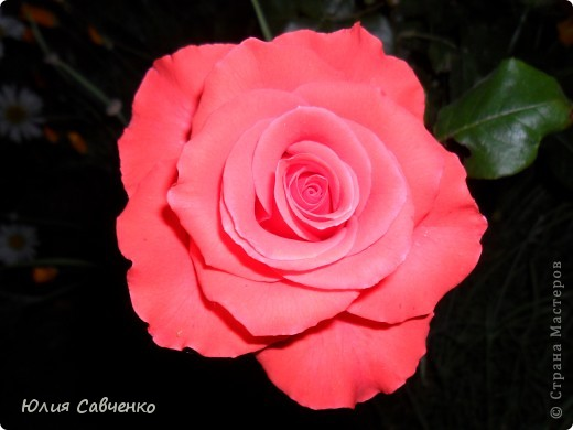 Кто не верит, всех зову я в сад,  Видите, моргая еле-еле,  На людей доверчиво глядят  Все цветы, как дети в колыбели.  В душу нам глядят цветы земли,  Добрым взглядом всех кто с нами рядом.  Или же потусторонним взглядом  Всех друзей, что навсегда ушли. ( Расул Гамзатов)  фото 14