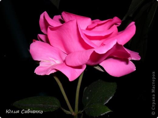 Кто не верит, всех зову я в сад,  Видите, моргая еле-еле,  На людей доверчиво глядят  Все цветы, как дети в колыбели.  В душу нам глядят цветы земли,  Добрым взглядом всех кто с нами рядом.  Или же потусторонним взглядом  Всех друзей, что навсегда ушли. ( Расул Гамзатов)  фото 15