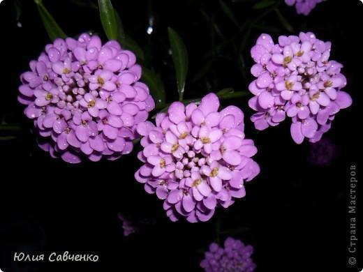 Кто не верит, всех зову я в сад,  Видите, моргая еле-еле,  На людей доверчиво глядят  Все цветы, как дети в колыбели.  В душу нам глядят цветы земли,  Добрым взглядом всех кто с нами рядом.  Или же потусторонним взглядом  Всех друзей, что навсегда ушли. ( Расул Гамзатов)  фото 23